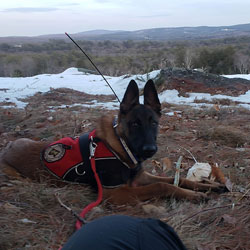 New England K9 Search and Rescue 8