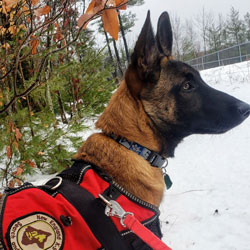 New England K9 Search and Rescue 10